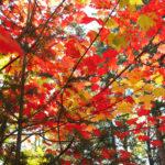 """En se promenant en forêt en ce 5 octobre 2016, notre collaboratrice Jocelyne Bélanger a pris cette photo. """"Avant de partir"""" est le nom du cliché"""